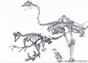 They weren't arranged like this, but I thought it was pretty cool that they had a dromaeosaur, an ostrich and a chicken skeleton. BIRDIE EVOLUTION!!